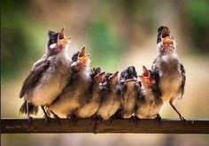 Oh sing me a song - looks like these chicks are waiting on mother bird to feed. Great photo!