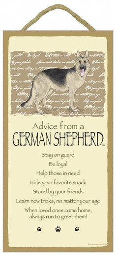 Wicked Training Your German Shepherd Dog Ideas. Mind Blowing Training Your German Shepherd Dog Ideas. German Shepherd Puppies, German Shepherds, Easiest Dogs To Train, Schaefer, Wood Dog, Dog Signs, Working Dogs, Dog Behavior, Dog Training Tips
