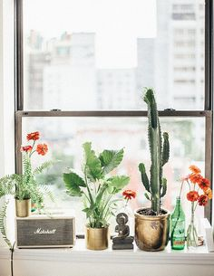 windowsill plant life