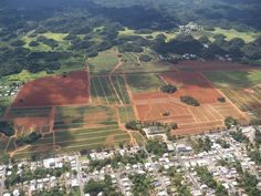 Pineapple Farm in Manati , P.R.