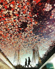 🍁The sky where fallen leaves swim🍁 Osaka / Japan #shotoniphone6s #mwjp#igersjp #youmobile #ink361_asia  #team_jp_西 (大阪) #indies_gram #team_jp_秋色2016  #shootermag_japan #icu_japan  #ig_japan #ig_myshot #phos_japan  #far_eastphotography #jp_gallery_member #royalsnappingartists  #奥行き同盟