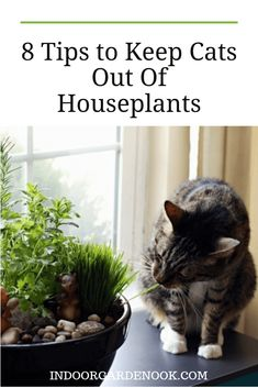 No solution is foolproof, but there are ways to make it much harder for your cat to ruin your plants. If you're tired of seeing your greenery shredded and soiled, no pun intended, give some of these tips a try. Garden Nook, Cat Garden, Garden Spaces, Indoor Planters, Flower Planters, Flower Pots, Cat Plants, Cat Grass, Cat Flowers