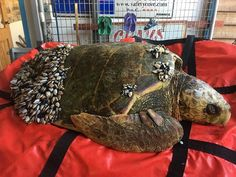 Fishermen Find Sick Sea Turtle Who Really Needs Their Help