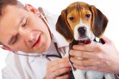 Mascotas también requieren vitaminas