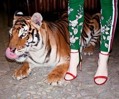 Boycott use of these wild, beautiful, endangwred animals for this rediculousness and greed!!!! Gucci SS17 campaign