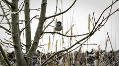 #canon7d #photography  #bird #tree #branches