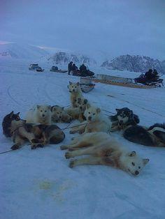 Hunting w/ ski-doos & huskies, photo by Brian Aola