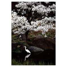 【hiroshi118】さんのInstagramをピンしています。 《もうすぐ桜の時期!楽しみです🌸 その前に梅もありますが😆! * #カメラ #カメラ部 #写真好きな人と繋がりたい #写真撮ってる人と繋がりたい #ファインダー越しの私の世界 #ファインダー越しのわたしの世界 #写真 #写真好き #カメラ練習中 #カメラマン #カメラ好き #東京カメラ部 #igersjp #ig_japan #instagramjapan #instagramphoto #photography #photo #photographer  #lovers_nippon #team_jp #1x #500px #phos_japan #jp_gallery #tokyocameraclub #icu_japan  #photooftheday #桜 #鳥》
