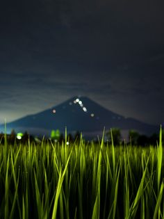 Fuji & rice field:PHOTOHITO