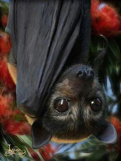 Sognare pipistrelli Leggi qui: http://www.cavernacosmica.com/sognare-pipistrello/