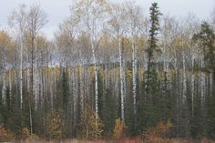 Manitoba forest types