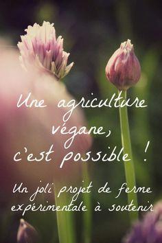 Il y a quelques jours, nous avons reçu un mail de Gwendal et sa compagne Anaïs nous informant de leur projet de créer une micro-ferme végétale expérimentale en Mayenne, sur un terrain de 7000 m2 qu'ils occupent déjà (ils y ont installé notamment une yourte...