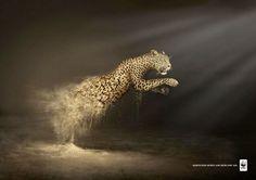 """Desertification destroys 6.000 species every year""  기후변화로 인한 사막화가 한해 6,000종의 동물을 파괴한다."