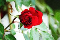 Flowers, Plants, Mother Nature, Art Print, Nice Asses, Photo Illustration, Florals, Planters, Flower