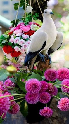 Bird and flowers. Wallpaper Nature Flowers, Rose Flower Wallpaper, Beautiful Flowers Wallpapers, Beautiful Rose Flowers, Beautiful Nature Wallpaper, Exotic Flowers, Beautiful Birds, Animals Beautiful, Dove Images