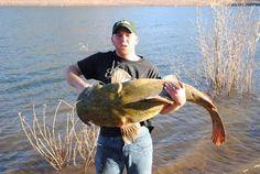 flathead catfish - Google Search