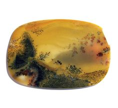 Giant Dendritic Moss Agate Cabochon Collectible stones Just sold to Washington Sticks And Stones, Mineral Stone, Jasper Stone, Moss Agate, Rocks And Minerals, Amazing Nature, Fossils, Beautiful Landscapes, Geology