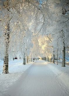 snow covered road of trees