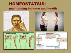 Homeostasisavi youtube studying anatomy and physiology check out this item fandeluxe Choice Image
