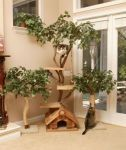 Cool Cat Trees!