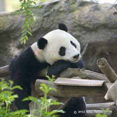 Yun Zi | Our handsome Yunior , sure do love this not so litt… | Flickr