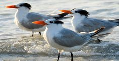 Beach-Birds-Nature
