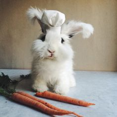 themountainlaurel:  Cleo the Bunny