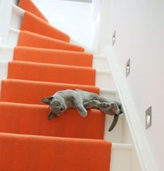 orange is a bold choice as a stair runner, but I really like the look of this staircase. No grey cats in my house.but the grey is beautiful. Orange Gris, Orange Color, Orange Zest, Orange Poppy, Chat Bizarre, Orange Aesthetic, Cat Aesthetic, Photo Chat, Pass Photo