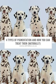 Ever wondered how you can get rid of pigmentation naturally? Look no further to discover the secret to beautiful flawless skin. Wellness Tips, Health And Wellness, Flawless Skin, Rid, Teddy Bear, Treats, Natural, Animals, Beautiful