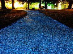 Glow in the Dark Pebbles: Turn your front yard into a scene right out of Avatar! Line a walkway, edge a flower bed or fill a planter with these unique acrylic pebbles. After being exposed to daylight, these pebbles glow (sky blue) in the dark. Bike Path, Parcs, Dark Night, Garden Paths, Pathways, Shade Garden, The Darkest, Pacific Northwest, Outdoor Living