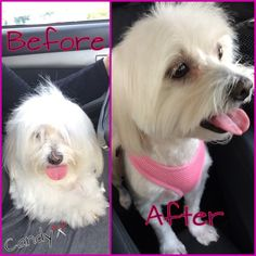 My new baby #cotondetulear #beforeandafter
