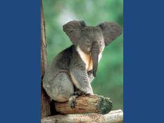 (2012-03) Elephant + koala = elala?