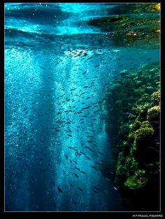 Great Barrier Reef needs to be at the top of my bucket list...