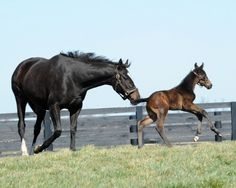 You're definitely going to get sick of me posting all these amazing pics of Zenyatta & her adorable colt.