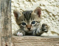 Good Morning Kitten - Feral Kitten in Greece [redux] - January 28, 2012