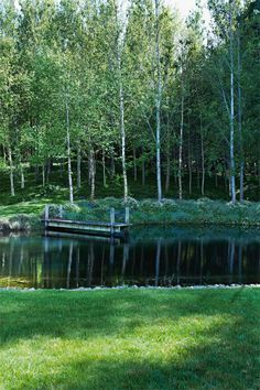 pond surrounded by a grove of birch trees | photo prue ruscoe