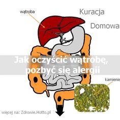 zdrowie.hotto.pl-jak-oczyscic-watrobe-pozbyc-sie-alergii-i-pasozytow-kamienie Health And Beauty, The Cure, Disney Characters, Fictional Characters, Food Truck, Healthy, Allergies, Diet, Food Carts