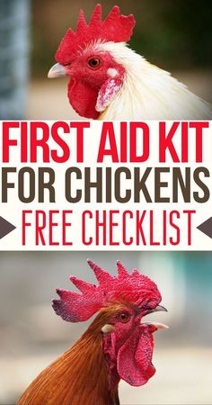 Need this for my chickens! Backyard Chickens – Raising Chickens – Chicken Health – Chickens – First Aid Kit – Homesteading – Checklist – Chicken Care – Chicken Illness – Sick Chicken – Chicken Diseases Backyard Chicken Coop Plans, Cheap Chicken Coops, Chicken Garden, Raising Backyard Chickens, Keeping Chickens, Pet Chickens, Chicken Coop Kit, Urban Chickens, Treats For Chickens