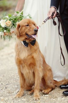Handsome pup: http://www.stylemepretty.com/new-jersey-weddings/avalon/2015/04/07/new-jersey-nautical-yacht-club-wedding/ | Photography: Alison Conklin - http://alisonconklin.com/