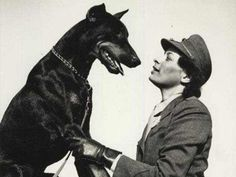 Doberman in WWII It's a shame they were ALL left behind!! Considered expendable equipment!