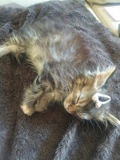 #kitten #burberry style