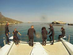 Kelp Forest, Cape Town, Scuba Diving, Shark, Diving, Sharks