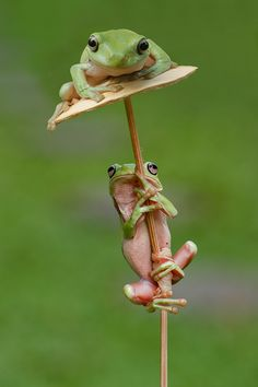 ~~waiting for a friend ~ frog friends by Ellena Sustani~~