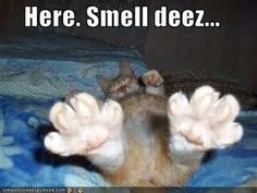 Funny Cat Pictures With Captions | Funny Animal Pictures With Captions Very Cats Cute Kitty Cat