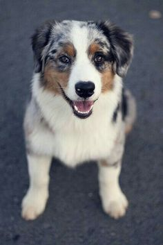 \\happy pup