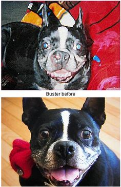 Buster Before and After