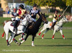 EquusPixPhotography
