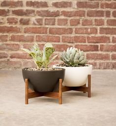 Uncluttered and graceful, BOXHILL's Case Study Table Top Bowl + Wood Stand will lend a sophisticated, urban feel to any décor. The appealing, clean design of this versatile planter allows you to carry your interior decorating sensibility to your exterior decor and vice-versa. See all of our elegant planters at www.shopboxhill.com
