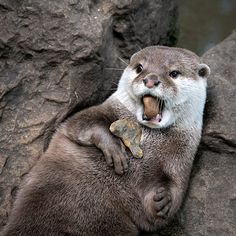 Otter, that stone cannot taste very good - August 29, 2015