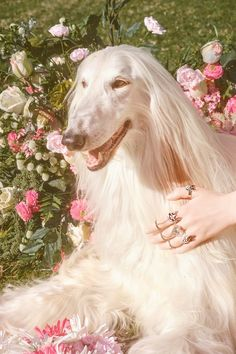 """midnight-charm: """"Gucci celebrates the year of the dog Photography by Petra Collins Art Director: Christopher Simmonds """" Pink Nature, Petra Collins, Dog Years, Dog Photography, Chinese New Year, Beautiful Creatures, Aesthetic Pictures, Puppy Love, Cute Dogs"""